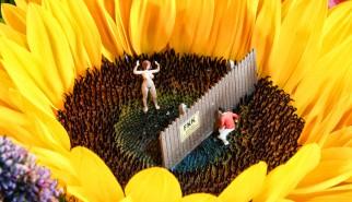 Sonnenblume-FKK